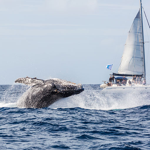 Whale watching New Caledonia